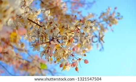 Sakura and the blue sky #1321547504