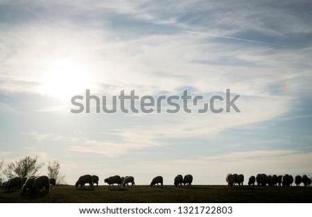 Sheep herd on meadow #1321722803