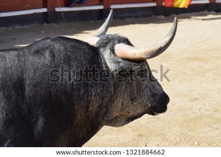 Spanish bull with big horns #1321884662