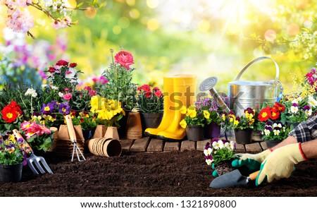 Gardening - Equipment For Gardener And Flower Pots In Sunny Garden  #1321890800