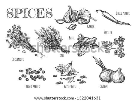 Vector illustration of spices set. Garlic, dill, chili pepper, basil, parsley, coriander, seeds of black pepper, bay leaves, onion. Vintage hand drawn style. #1322041631