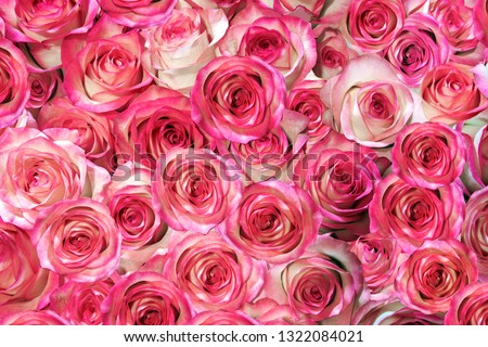 roses isolated on a black background. Greeting card with roses #1322084021
