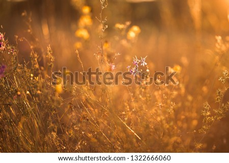 Macro photo of twigs, grass and flowers against sunset. Summer hot golden pictures of nature.  #1322666060