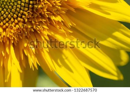 Flower sunflower bright bloom. Shallow depth of field. Flower blurred background. Flower segment. #1322687570