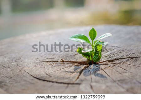 A strong seedling growing in the center trunk of cut stumps. tree ,Concept of support building a future focus on new life #1322759099
