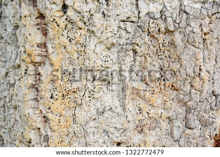 modern background of cork stem and bark #1322772479