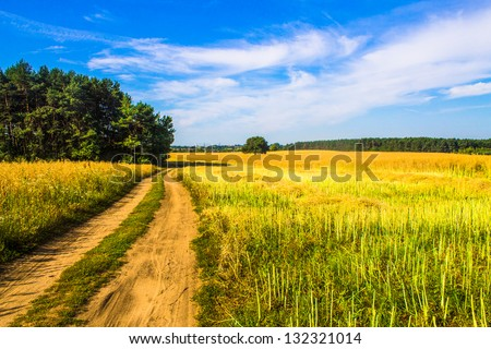 Road in the field #132321014