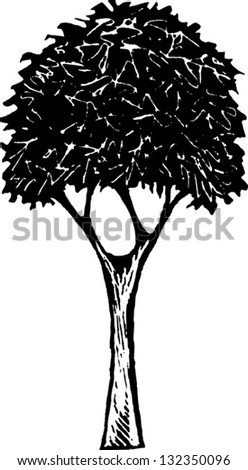 Black and white vector illustration of a tree #132350096