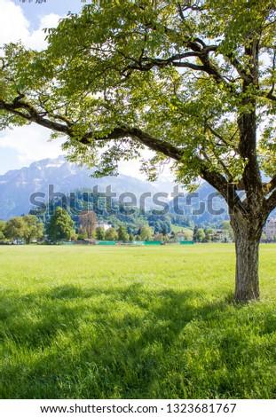 Interlaken, Switzerland - 11/05/2018: Park Hohematte. View of the Alps. Interlaken #1323681767