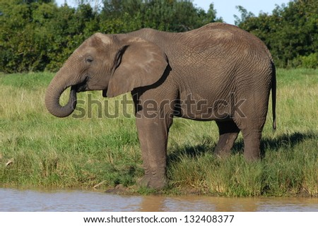 Photos of Africa, African Elephant