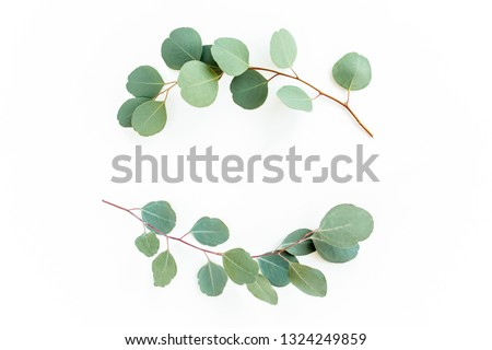 Wreath frame made of branches eucalyptus and leaves isolated on white background. Flat lay. Top view. #1324249859