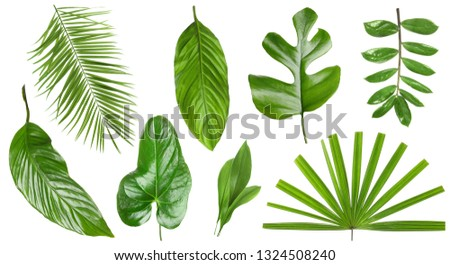 Set of different fresh tropical leaves on white background #1324508240