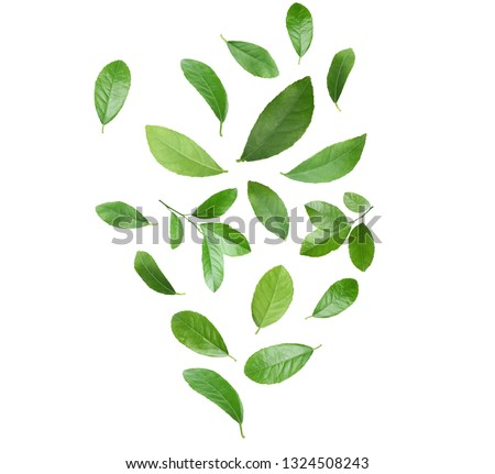 Set of flying green citrus leaves on white background #1324508243