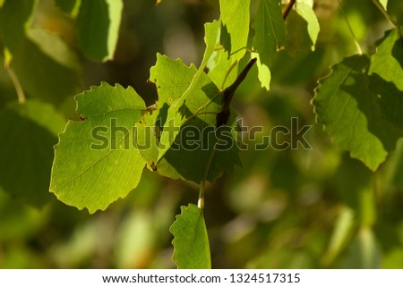 Leaves in the woods #1324517315