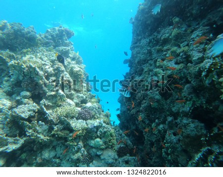 Underwater world, Egypt, red sea, colorful coral reef and fish, underwater with sunlight . #1324822016