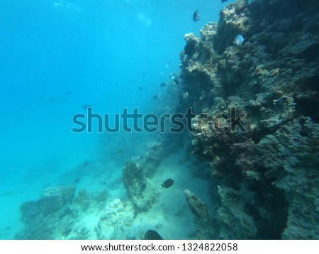 Underwater world, Egypt, red sea, colorful coral reef and fish, underwater with sunlight . #1324822058