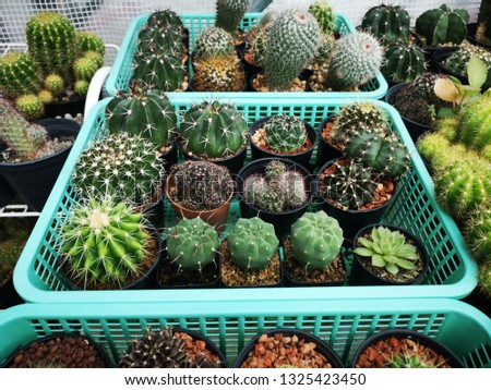 mini cactus decoration in garden.  #1325423450