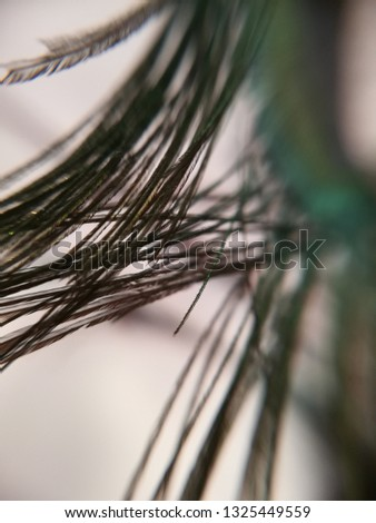 Peacock feather macro photography #1325449559