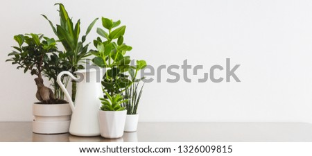 Plants in flowerpots on table near white wall mock up. #1326009815