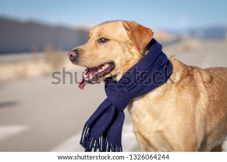 DOG WITH SCARF #1326064244