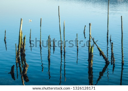 Wooden sticks standing in the blue water  #1326128171