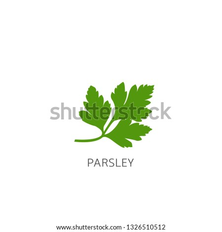 Parsley. Green healthy parsley isolated over white background Vector illustration #1326510512