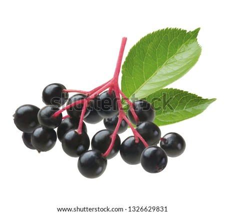 elderberries with leaves #1326629831