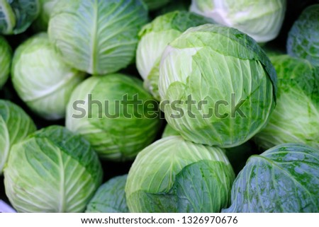 Group of green cabbages in a supermarket, Cabbage background, Fresh cabbage from farm field, a lot of cabbage at market place, Green cabbage for sale at a farmer's market stall, Healthy concept. #1326970676