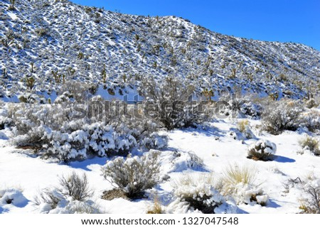Snow covered alpine terrain in the Mount Charleston region, popular hiking and climbing spots in the Spring Mountains, near Las Vegas Nevada #1327047548