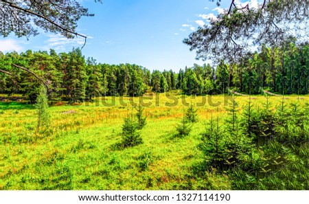 Summer forest meadow landscape. Forest meadow in sunny day. Forest landscape. Sunny day in forest #1327114190