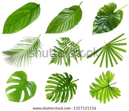 Set of different fresh tropical leaves on white background #1327121156