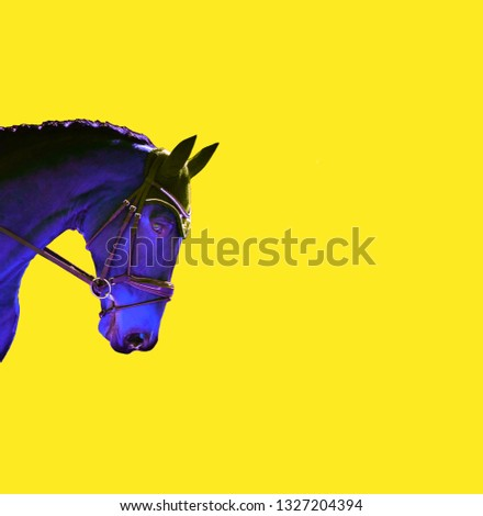 Contemporary art collage, horse on yellow background