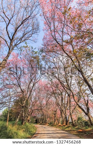 Soft Focus, Prunus cerasoides or cherry blossom is a beautiful pink flower that is used to represent love and integrity. Japan gives this flower the name Sakura and has a famous Sakura festival #1327456268