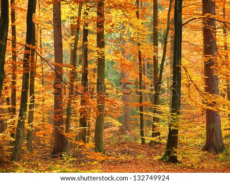 Colorful and bright autumn forest #132749924
