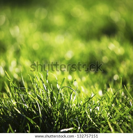green grass macro close up #132757151