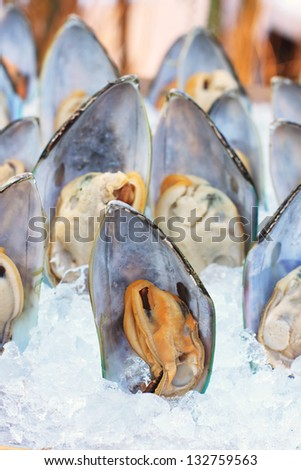 Asian green mussel on ice. #132759563