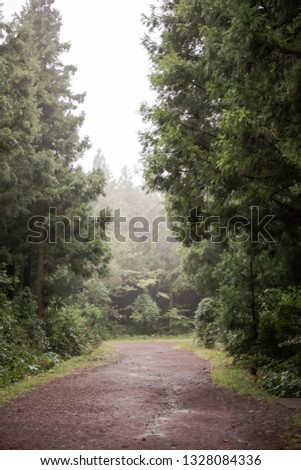 It is a picture taken in the forest of Jeju Island on the day when the fog rains.