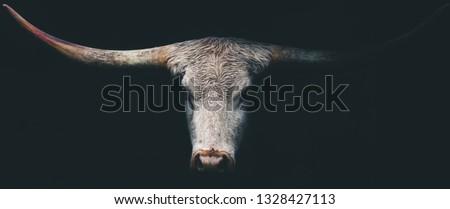 Dark Longhorn Cow Royalty-Free Stock Photo #1328427113