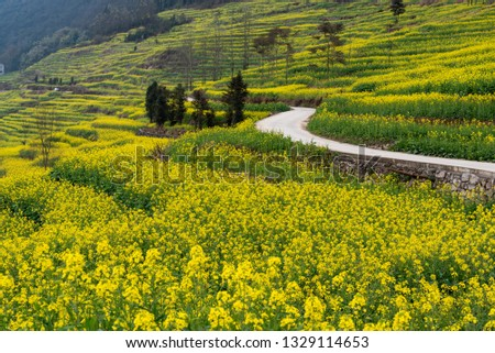 The Yellow rape fields with Karst terrain hills in Luoping, Yunnan, China. The area of rapeseed field is very large and very beautiful, it is a famous tourist attraction. #1329114653
