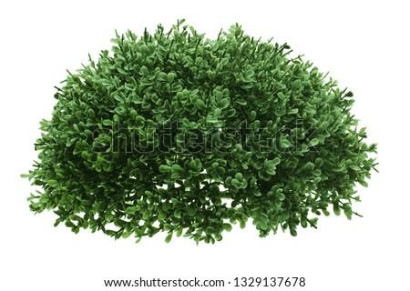 Green Shrub on White Background #1329137678