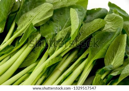 Komatsuna, Japanese Mustard Spinach #1329517547