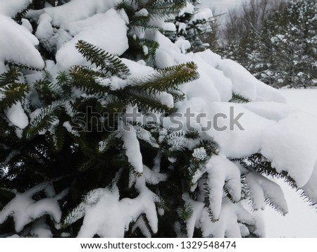 Green Pine Tree Branches Heavy with Cold White Snow on a Winter Morning in the Forest #1329548474