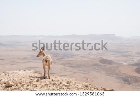 Ibex in Makhtesh Ramon crater  #1329581063