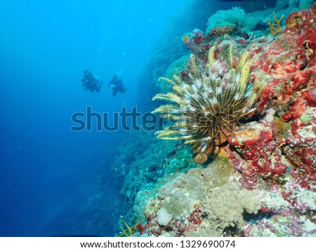 Scuba Diving over the reef in Papua New Guinea . Best dive sites with 30 m visibility and best time to dive is  always #1329690074