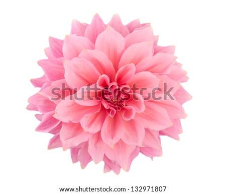 pink dahlia isolated on white background #132971807