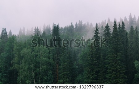 The forest after rain #1329796337