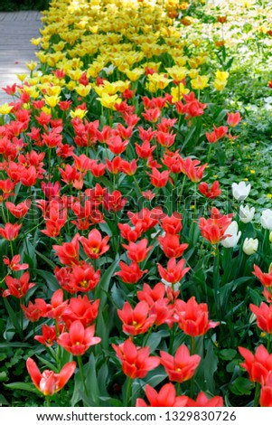 Flowers of red and yellow tulips on a green background, the image looks like a pattern #1329830726