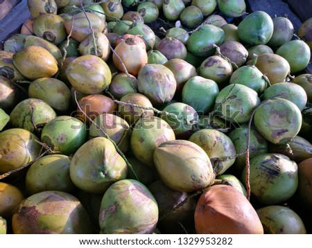 Young coconut fruits #1329953282