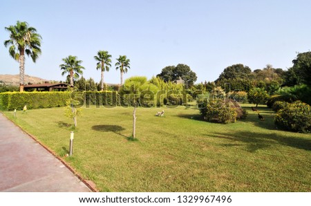 organic natural life landscape with trees and grasses #1329967496
