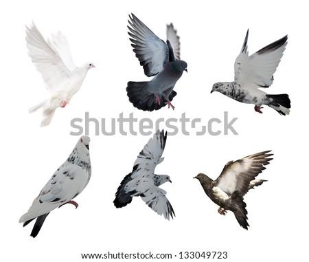 set of isolated on white six doves #133049723